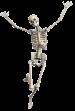 Skelet transparant